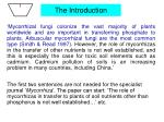 the introduction1