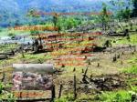 deforestazioaren ondorioak