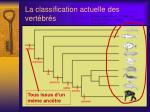 la classification actuelle des vert br s