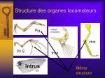 structure des organes locomoteurs