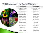 wildflowers of the seed mixture