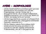 avere morphologie1