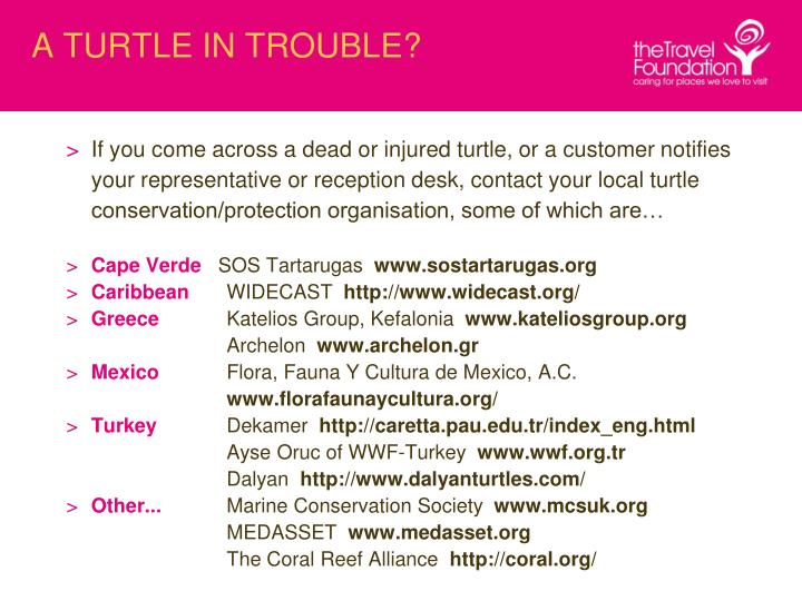 A TURTLE IN TROUBLE?