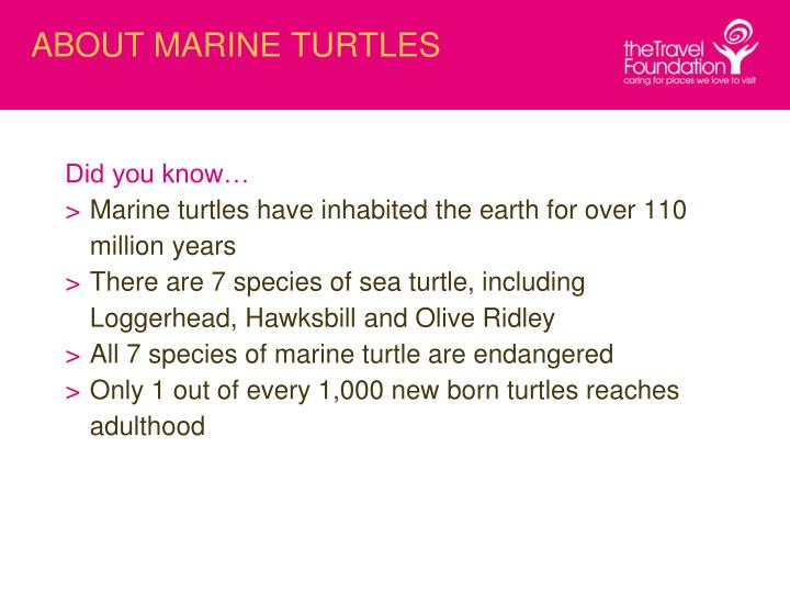 About marine turtles