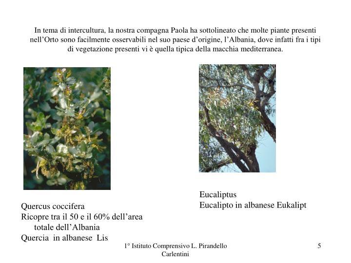 In tema di intercultura, la nostra compagna Paola ha sottolineato che molte piante presenti nell'Orto sono facilmente osservabili nel suo paese d'origine, l'Albania, dove infatti fra i tipi di vegetazione presenti vi è quella tipica della macchia mediterranea.