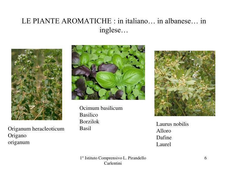 LE PIANTE AROMATICHE : in italiano… in albanese… in inglese…