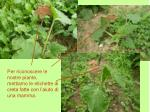 per riconoscere le nostre piante mettiamo le etichette di creta fatte con l aiuto di una mamma