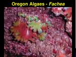 oregon algaes fachea