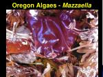oregon algaes mazzaella