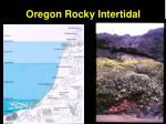 oregon rocky intertidal