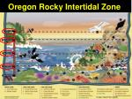 oregon rocky intertidal zone