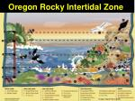 oregon rocky intertidal zone1