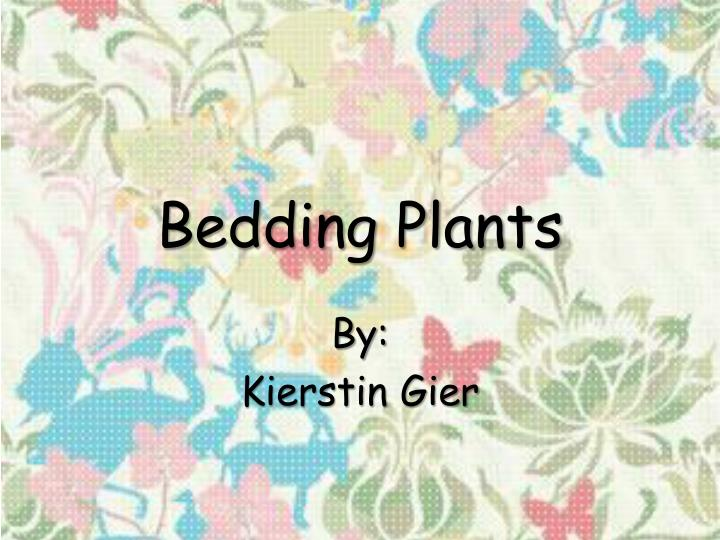 bedding plants n.