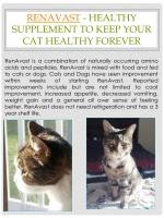 renavast healthy supplement to keep your cat healthy forever