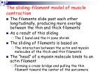 the sliding filament model of muscle contraction