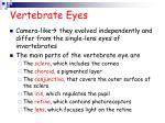 vertebrate eyes