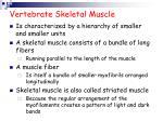 vertebrate skeletal muscle