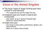 vision in the animal kingdom