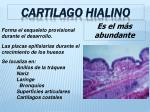 cartilago hialino