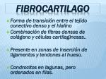 fibrocartilago