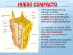 hueso compacto1