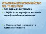 organizaci n macrosc pica del tejido seo