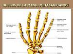 huesos de la mano metacarpianos