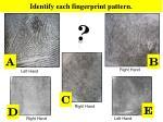 identify each fingerprint pattern