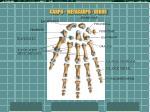 carpo metacarpo dedos