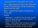 accessory organs of skin