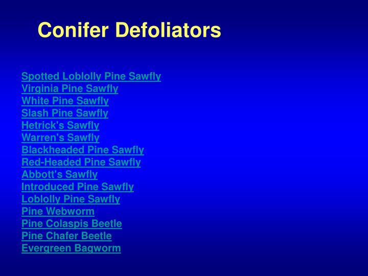 Conifer Defoliators