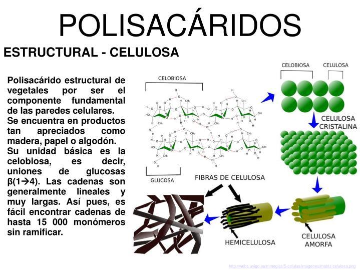 POLISACÁRIDOS