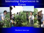 interesting experiences in korea1