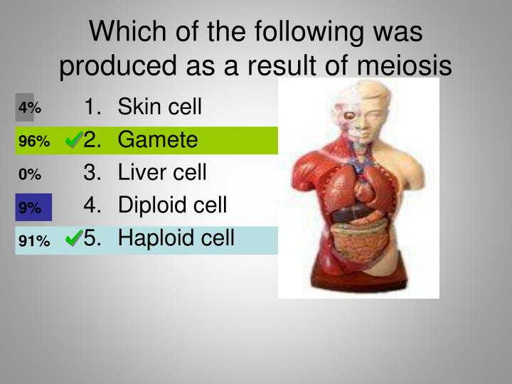 Which of the following was produced as a result of meiosis