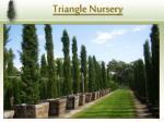triangle nursery1