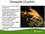 decapoda crayfish