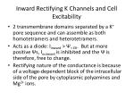 inward rectifying k channels and cell excitability