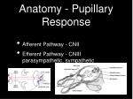 anatomy pupillary response