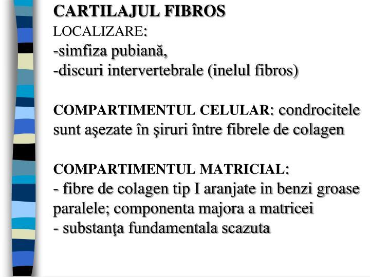 CARTILAJUL FIBROS
