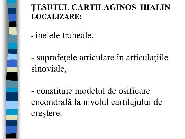 ŢESUTUL CARTILAGINOS  HIALIN