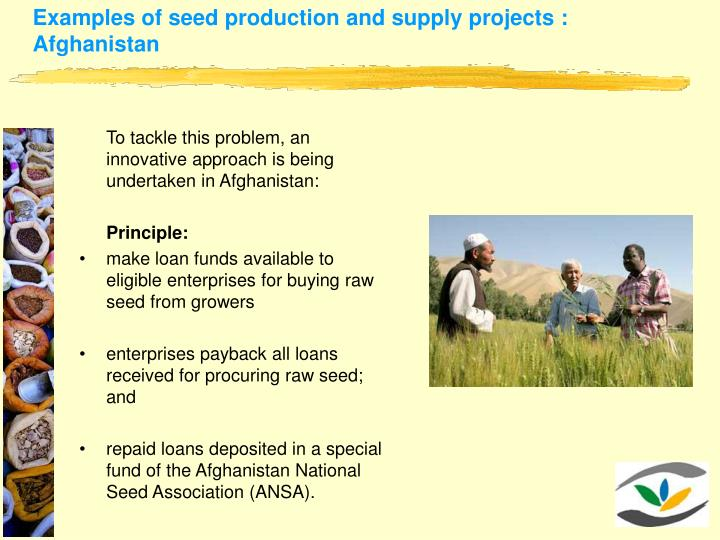 Examples of seed production and supply projects : Afghanistan