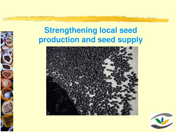 Strengthening local seed production and seed supply systems