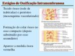 est gios de ossifica o intramembranosa1