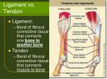 ligament vs tendon