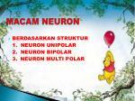 macam neuron