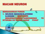macam neuron1