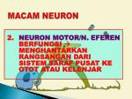 macam neuron2
