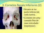 3 cornetos nasais inferiores 2