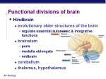 functional divisions of brain