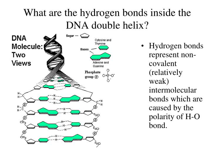 the processes caused by hydrogen bonds National academy of sciences the effect of hydrogen bonds in various protein processes and hydrogen bonding caused by the added.